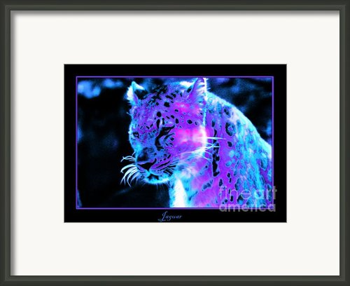 Jaguar  Framed Print By Nick Gustafson