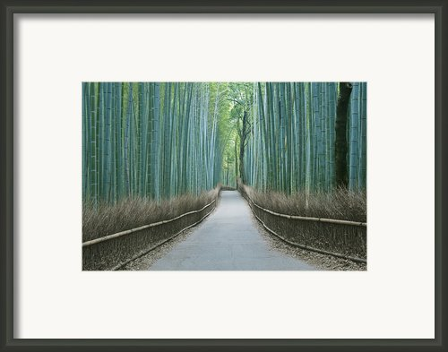 Japan Kyoto Arashiyama Sagano Bamboo Framed Print By Rob Tilley