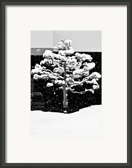 Japanese Tree In The Snow Framed Print By Dean Harte