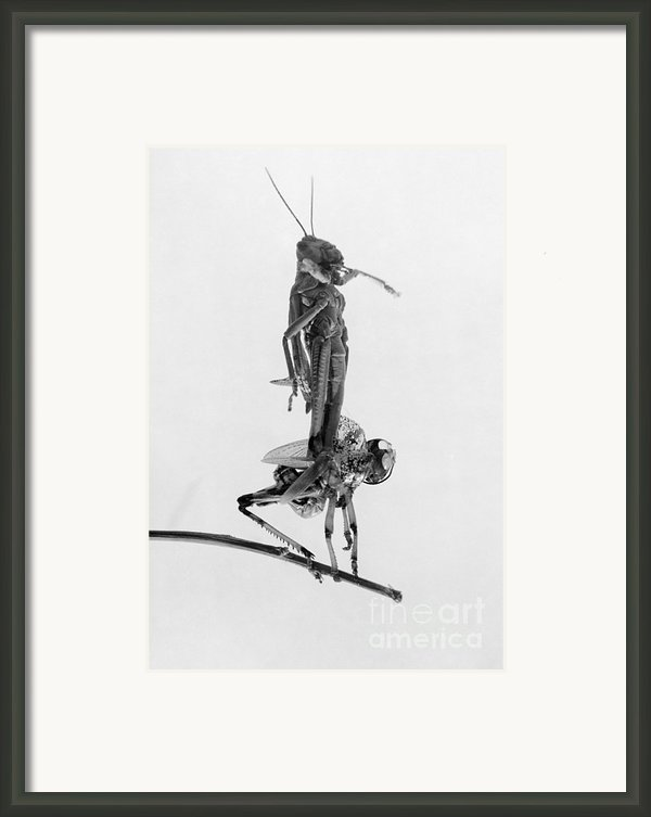 Jerusalem: Locusts, 1915 Framed Print By Granger