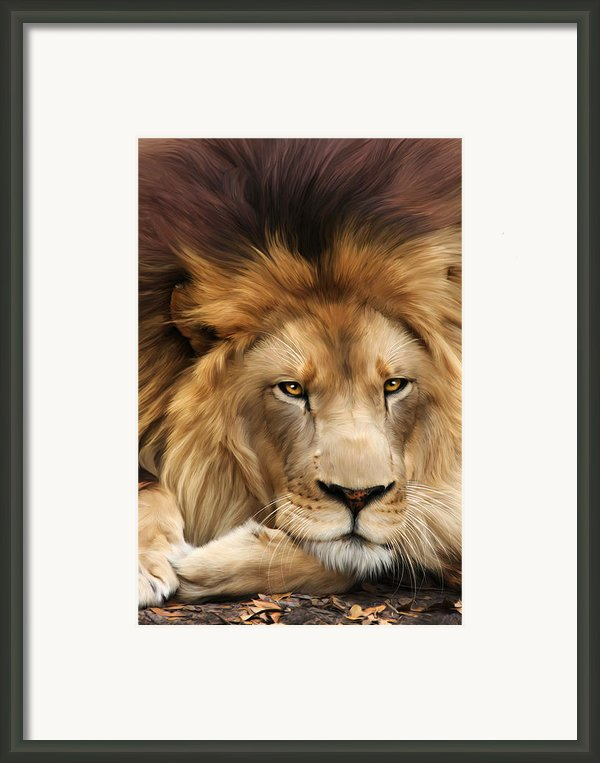 Joseph Framed Print By Big Cat Rescue