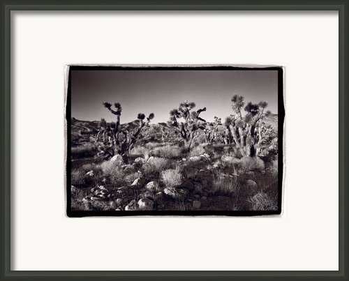 Joshua Tree Forest St George Utah Framed Print By Steve Gadomski