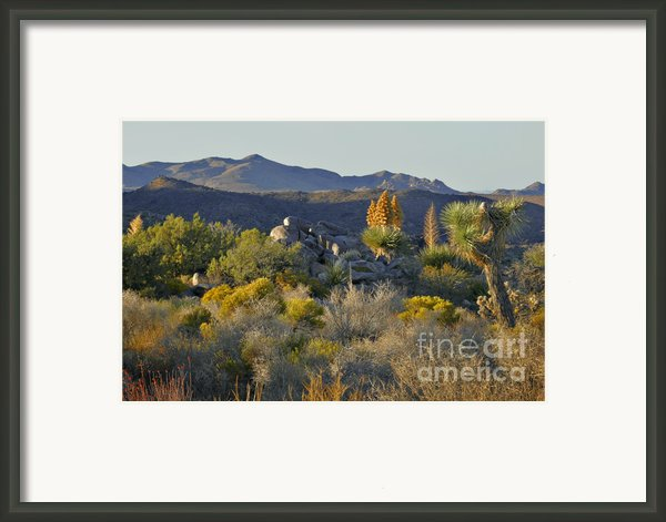 Joshua Tree National Park In California Framed Print By Christine Till