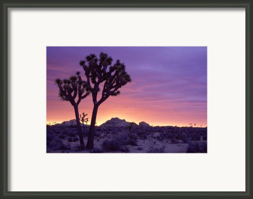 Joshua Tree Sunrise Framed Print By Eric Foltz