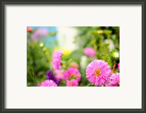 Joy Of Summer Time Framed Print By Jenny Rainbow