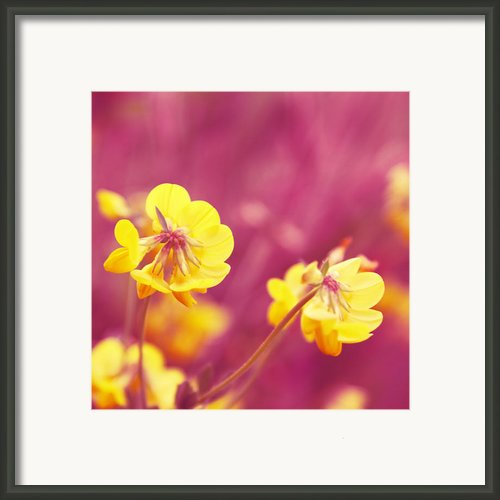 Joyfulness Framed Print By Aimelle