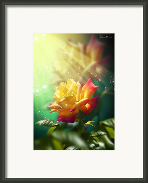 Juicy Rose Framed Print By Svetlana Sewell