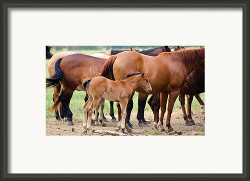 Just A Babe Framed Print By Lisa Moore