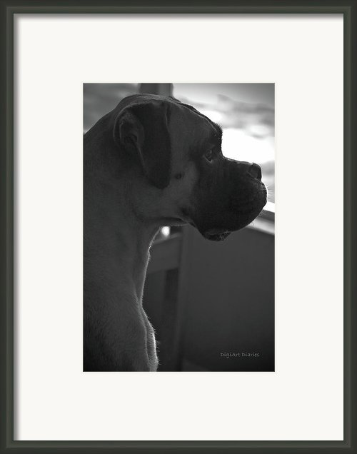 Just Handsome Framed Print By Digiart Diaries By Vicky Browning