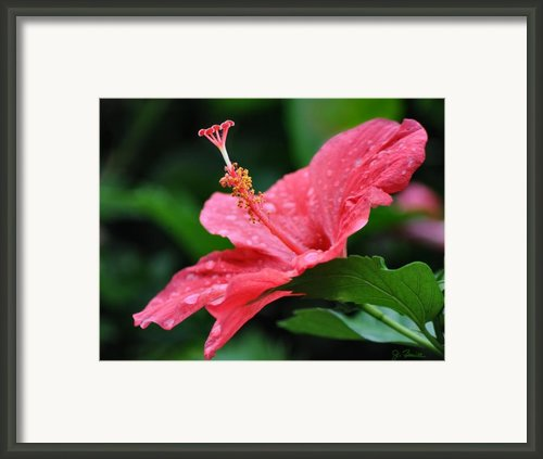 Kauai Beauty Framed Print By Joe Bonita