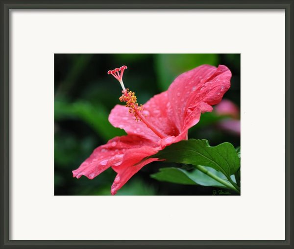 Kauai Beauty Framed Print By Joe Bonita