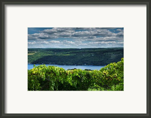 Keuka Vineyard I Framed Print By Steven Ainsworth