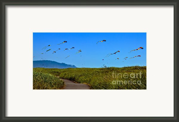 Kites Framed Print By Robert Bales