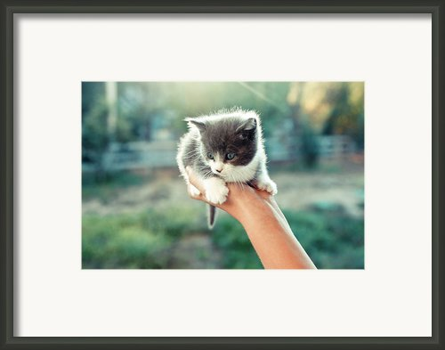 Kitten In Hand, 2010 Framed Print By Emily Golitzin