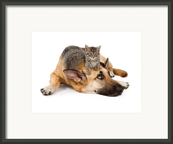 Kitten Laying On German Shepherd Framed Print By Susan  Schmitz