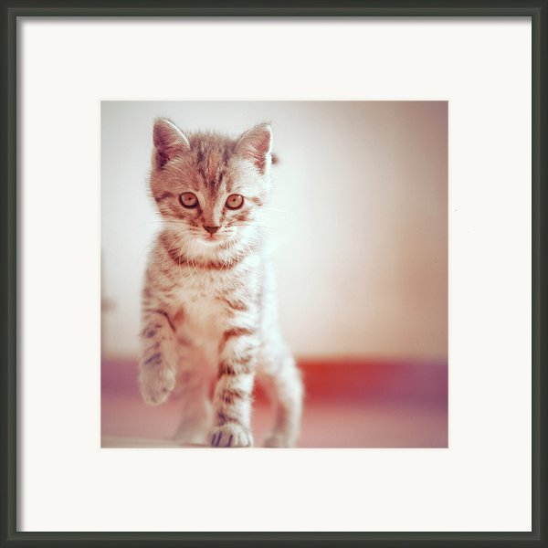 Kitten Walking On Floor Framed Print By Alberto Cassani