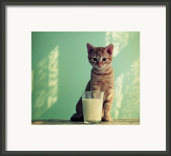 Kitten With Glass Of Milk Framed Print By By Julie Mcinnes