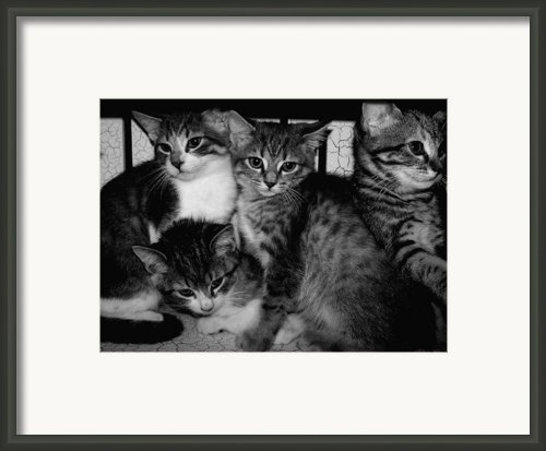 Kittens Corner Framed Print By Christy Leigh