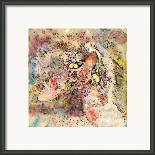 Kitty Fluffs Framed Print By Marilyn Sholin