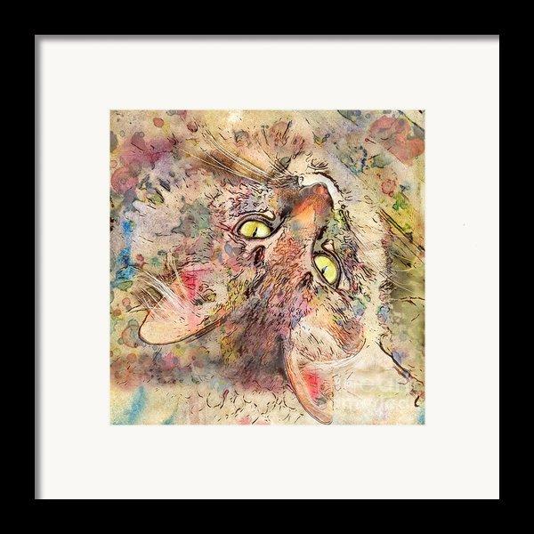 Kitty Fluffs Framed Print By Marilyn Sholin