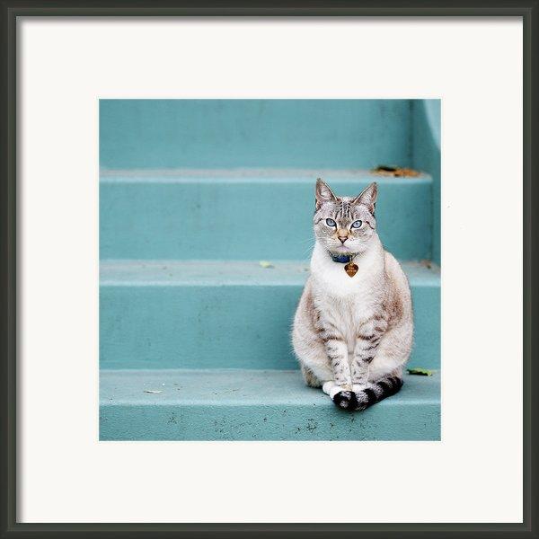 Kitty On Blue Steps Framed Print By Lauren Rosenbaum