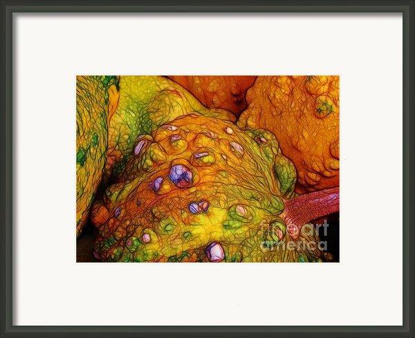 Knobbly Squash Framed Print By Judi Bagwell