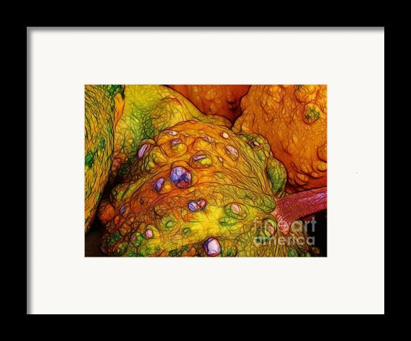 Knobbly Squash Framed Print By Judi Bagwell