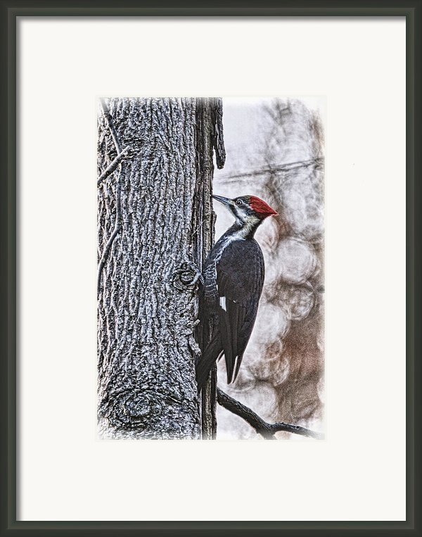 Knock Knock Framed Print By Lois Bryan