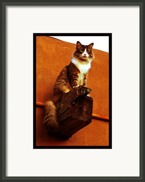 Kobe On Viga Framed Print By Susanne Still