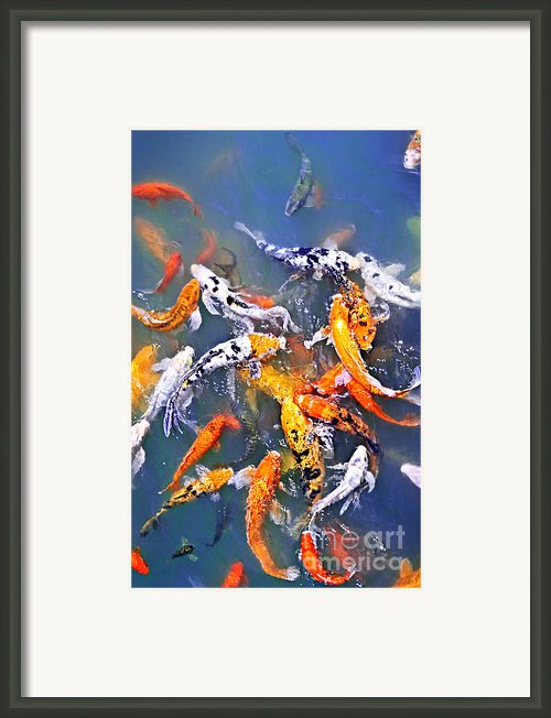 Koi Fish In Pond Framed Print By Elena Elisseeva