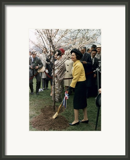 Lady Bird Johnson Planting A Tree Framed Print By Everett