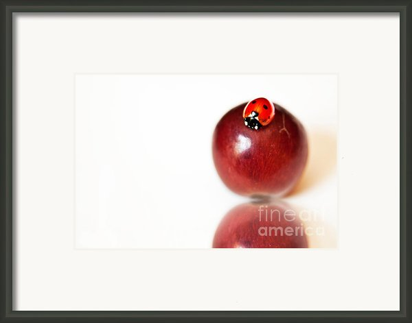 Ladybug On Grape Framed Print By Artist And Photographer Laura Wrede