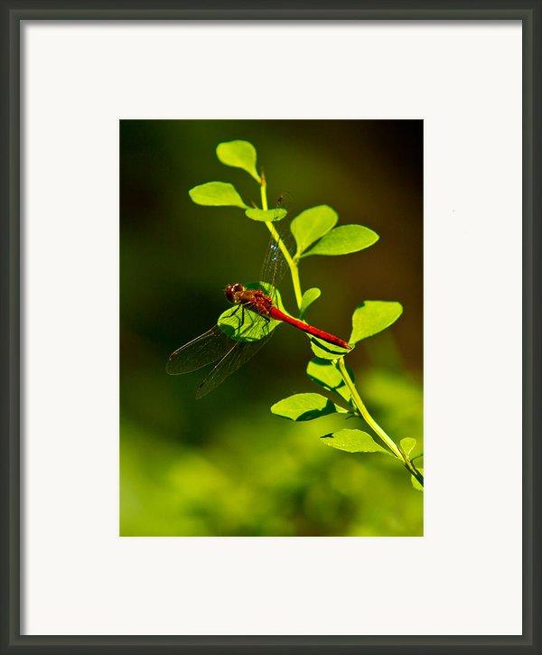 Landing Pad Framed Print By Frank Pietlock