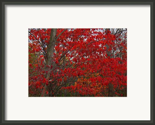 Last Gasp Framed Print By Ed Smith