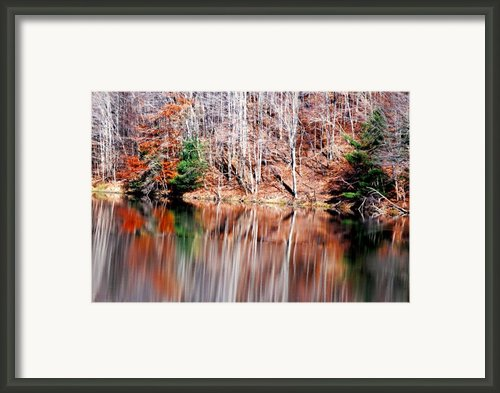 Late Fall Framed Print By Emily Stauring