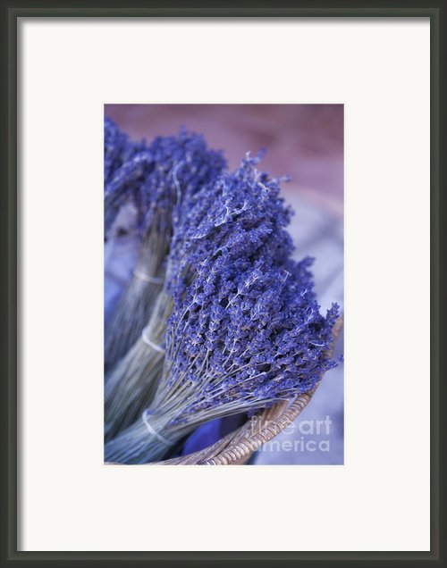 Lavender Bunches In Provence Framed Print By Paul Grand