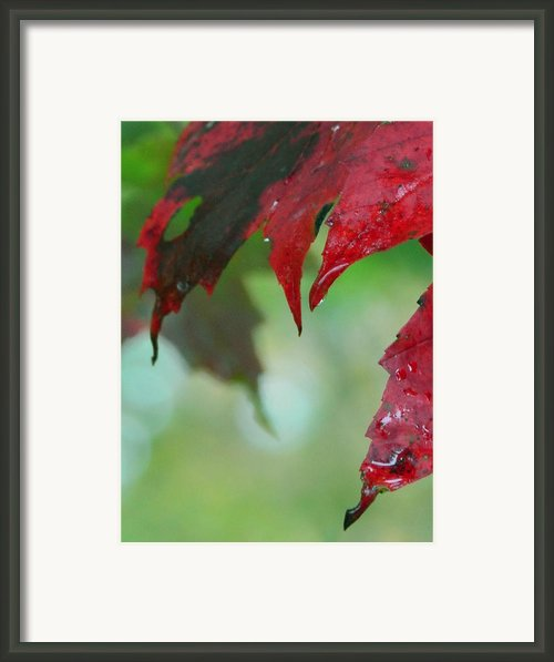 Leaf Shadows Framed Print By Mandi Howard