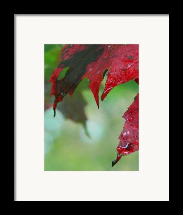 Leaf Shadows Framed Print By Mandi Howard