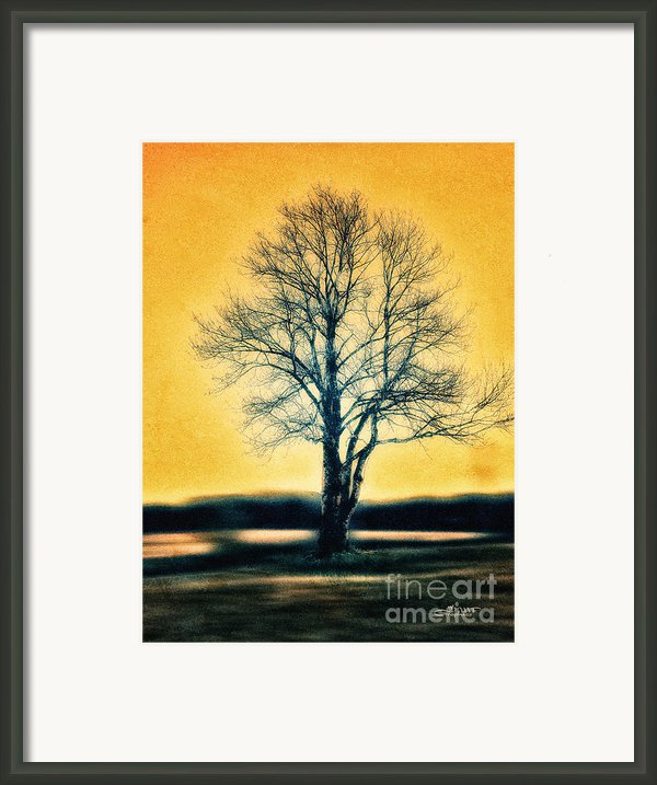 Leafless Tree Framed Print By Jutta Maria Pusl