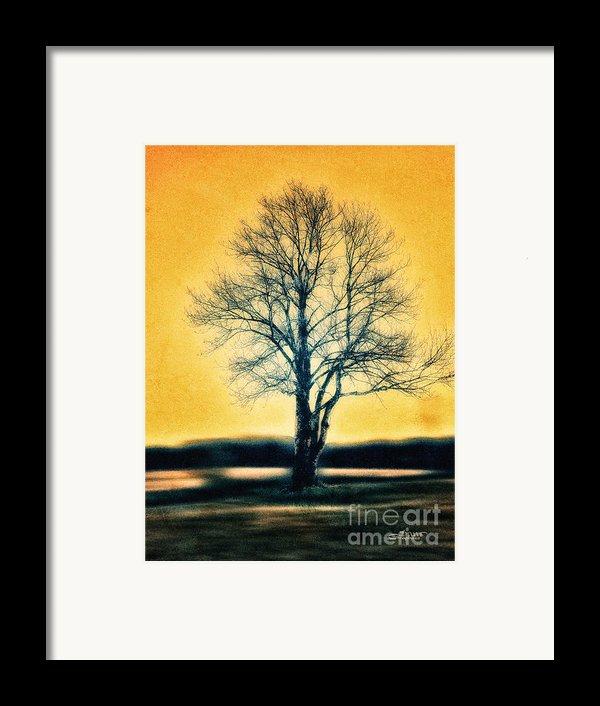 Leafless Tree Framed Print By Jutta Maria Pusl