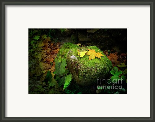 Leafs On Rock Framed Print By Carlos Caetano