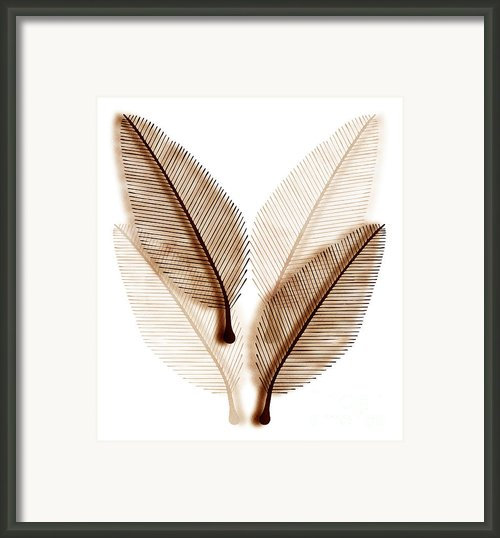 Leaves Framed Print By Frank Tschakert