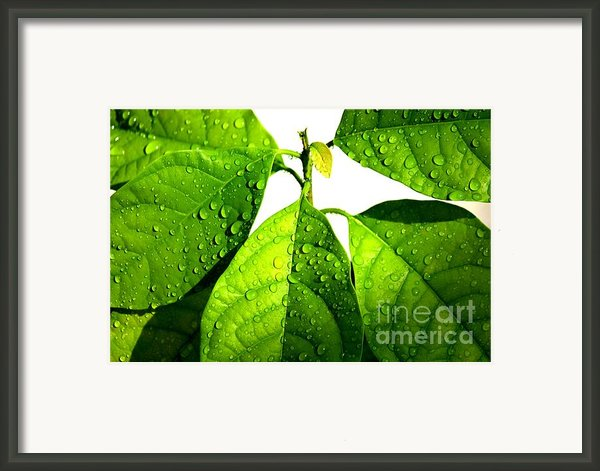 Leaves With Raindrops Framed Print By Theresa Willingham