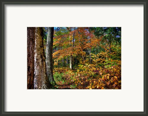 Leaving Cary Lake Framed Print By David Patterson
