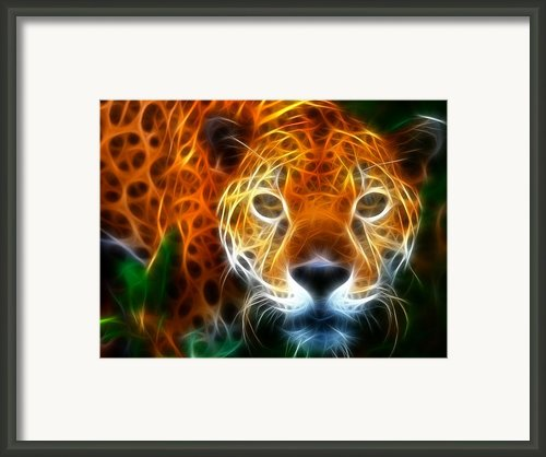 Leopard Watching At His Prey Framed Print By Pamela Johnson