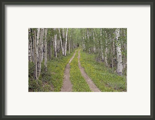Less Traveled Road Through Aspens Framed Print By Dawn Kish