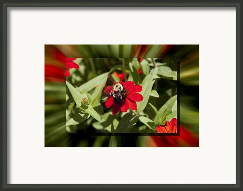 Let It Bee Framed Print By Charles Warren