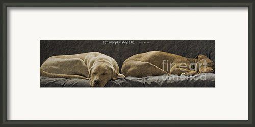 Let Sleeping Dogs Lie Framed Print By Gwyn Newcombe