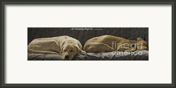 Let Sleeping Dogs Lie Framed Print By Gwyn Newcombe