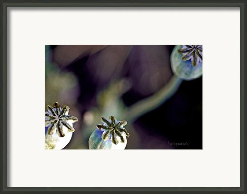 Life Force  Framed Print By Barb Pearson